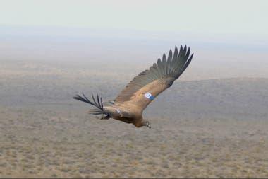 Karut fue el primero que voló en la ceremonia de liberación