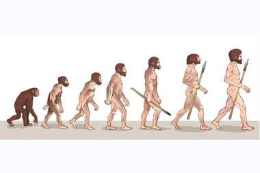 """""""Un ancestro común con los chimpancés divergió en dos linajes diferentes, seguramente por cuestiones climáticas"""""""