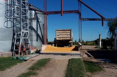 En el campo de Esteban Vitto, en Las Peñas Sud, se cargó cereal para una destilería