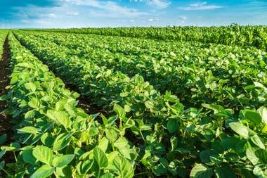 La soja aprobada es propiedad de la firma china DBN