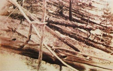 """Primeras imágenes de la devastación """"radial"""" de un bosque, provocada por la explosión de un asteroide (Kulik)"""