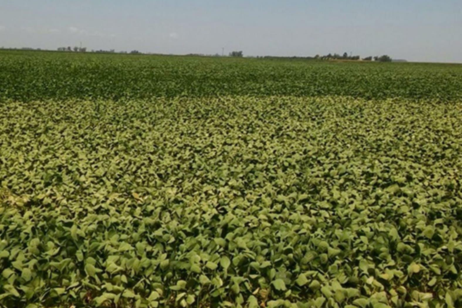 Las pérdidas en soja por las tres sequías en los últimos diez años equivalen al 25% de las reservas internacionales