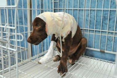 Justicia  Le dieron un año de prisión al acusado de despellejar a un perro