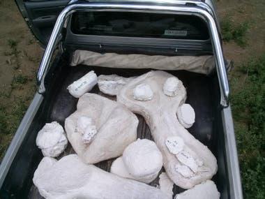 Bochones cargados en la camioneta para llevarlos al laboratorio