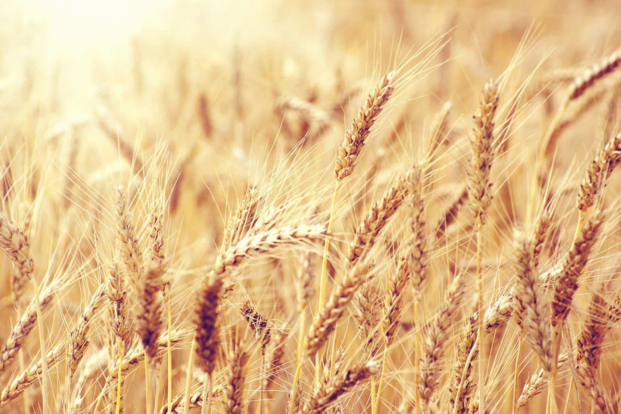 Las subas del trigo y del maíz impulsaron los negocios en Rosario