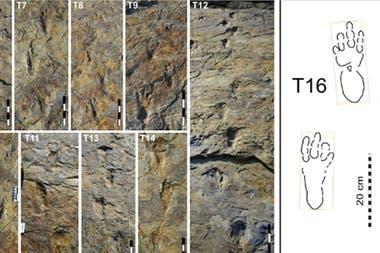 Las huellas encontradas en Corea del Sur