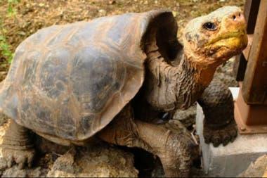 Las tortugas gigantes son uno de los atractivos fundamentales del turismo en Galápagos.