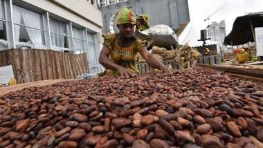 Los precios del cacao experimentaron una disminución desde 1980