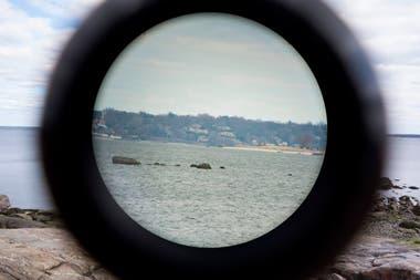 Avistaje de focas en Orchard Beach