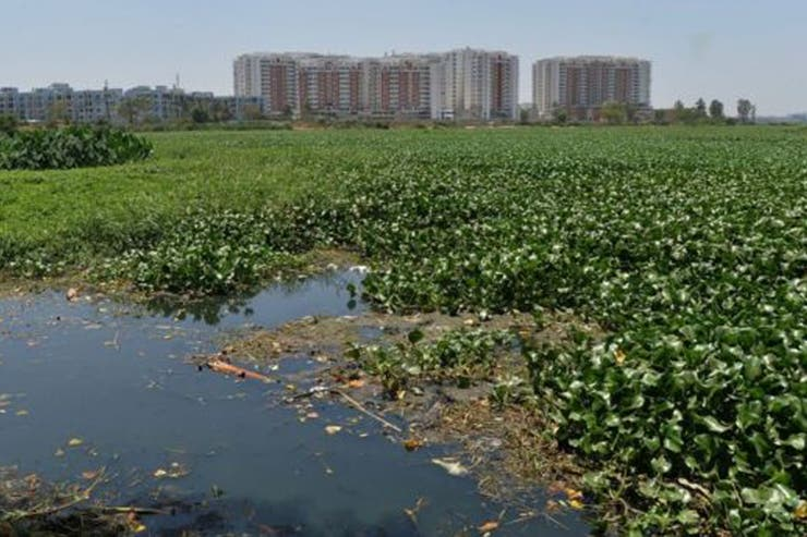 La contaminación en los lagos de Bangalore es extensa