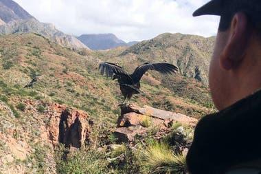 Imagen de un condor a modo ilustrativo