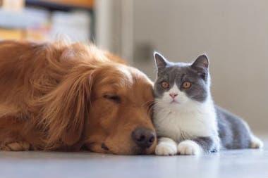 El proceso de domesticación de los gatos fue muy diferente al de los perros
