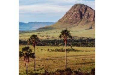 El terreno se caracteriza por tener mesetas extensas en su paisaje.Sin embargo, la deforestación, la expansión agrícola y los incendios han destruido casi el 60% de ella.