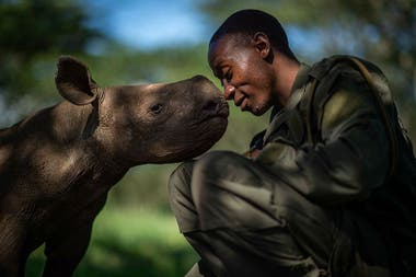 Un conmovedor retrato de un guarda forestal con un rinoceronte negro bebé