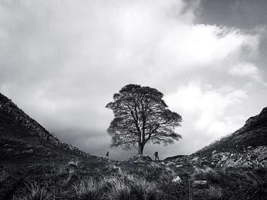"""""""Estaba caminando por la Muralla de Adriano en el noreste de Inglaterra. Era un típico día de mal humor y me gustó cómo el árbol y los excursionistas se veían frente a las nubes en esta caída dramática de la muralla romana """""""