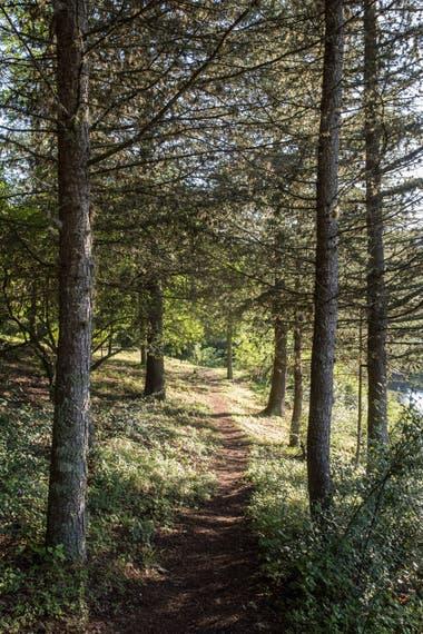 Uno de los senderos que llevan al río.