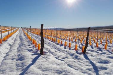 El frío extremo de Sarmiento (Chubut) es uno de los desafíos que enfrenta la bodega Otronia