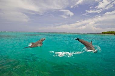 Una danza con delfines, es una de las cosas que ningún turista puede perderse si va a Utila