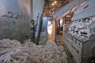 Una cooperativa es la que aglutina a los productores de algodón.