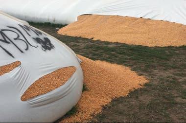 Uno de los silobolsas rotos en Vedia donde Cargill tiene almacenaje de granos