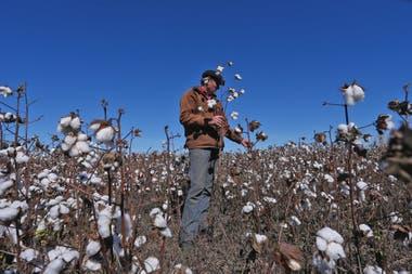 El algodón hoy es marginal.
