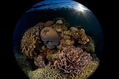 """Tercer puesto: """"Arrecife al amanecer"""" tomada en Moalboal, Cebu, Filipinas por Enrico Somogyi"""