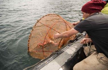 Pesca artesanal con redes cónicas donde el animal entra, pero no puede salir.