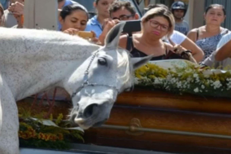 La conmovedora despedida que un caballo le hizo a su jinete