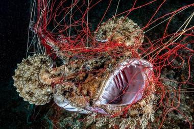 "Segundo puesto: ""Atrapado"" tomada en Punta Chiappa Camogli, Italia, por Alessandro Grasso"