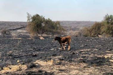 Casi 200.000 hectáreas de campos se incendiaron en Córdoba