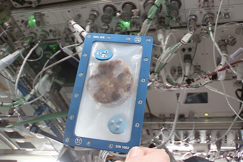 Hornearon las primeras galletitas de chocolate en la Estación Espacial Internacional