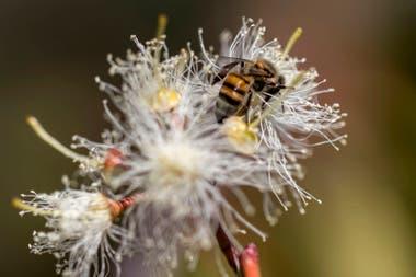 El 40% de las especies polinizadoras de invertebrados, en particular abejas y mariposas, corren peligro de extinción
