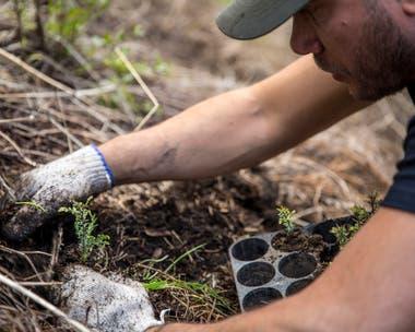 53 voluntarios trabajaron para reforestar un bosque del Parque Nacional Los Alerces