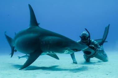 Las expediciones para el hallazgo del tiburón que se creía extinguido se realizaron en las aguas del Océano Índico, en la costa este de Sudáfrica