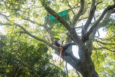Marianela Massat en acción: sube a diario a los árboles para cuidar de los guacamayos