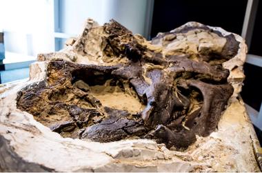 Los fósiles fueron descubiertos por tres granjeros en una ladera de montaña en Montana, Estados Unidos (SWNS)